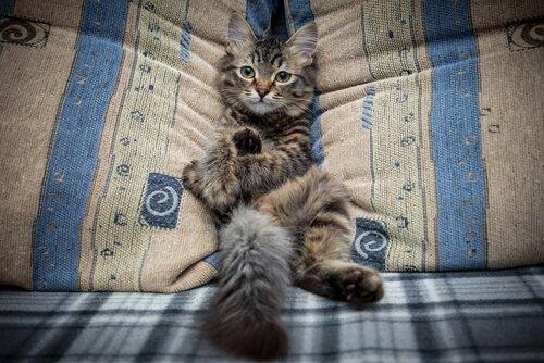 Come impedire al gatto di salire sul divano
