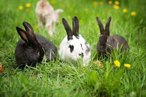 Conosciamo insieme i conigli: non sono dei roditori