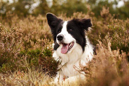 Ajax, il cane che salva gli uccelli in via di estinzione