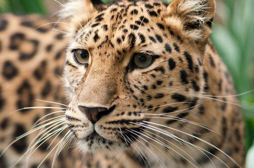5 specie in stato critico di estinzione