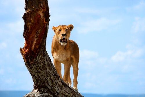 Parchi nazionali dell'Africa da non perdere