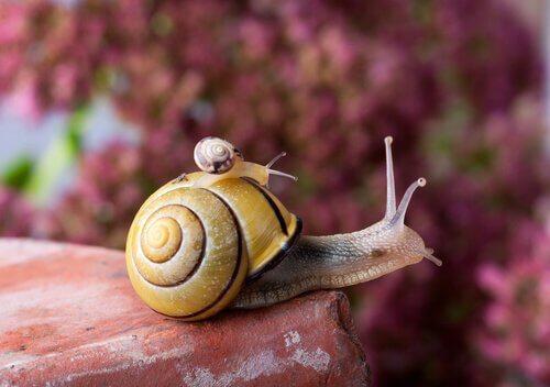 La vita della chiocciola: con la casa sulle spalle