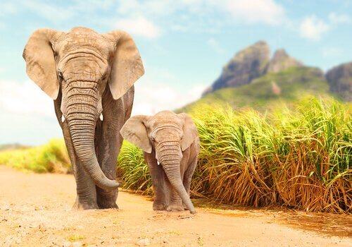 Rilevare terremoti per proteggere gli elefanti