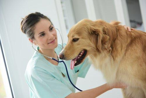 Il megaesofago nei cani: sintomi e trattamento