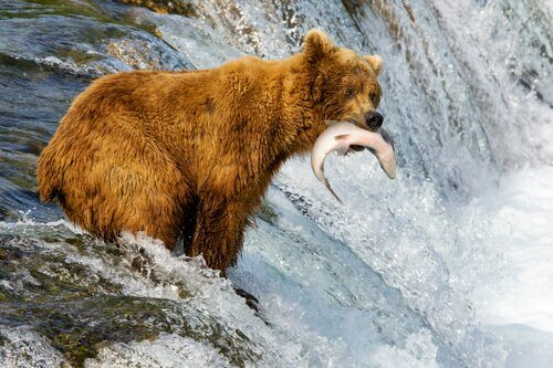 5 animali che vivono in Alaska