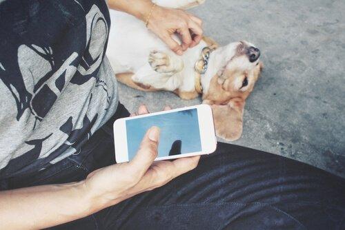 Padrone coccola cane con uno smartphone nella mano