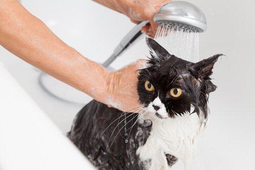 Padrone fa la doccia a un gattino nero e bianco