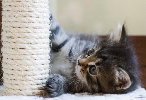 Gattino con tiragraffi
