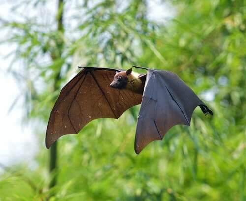 Pipistrelli e vampiri, una curiosa associazione