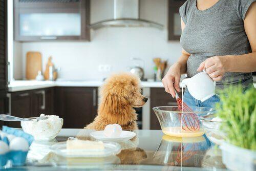 Ragazza cucina con accanto un cane
