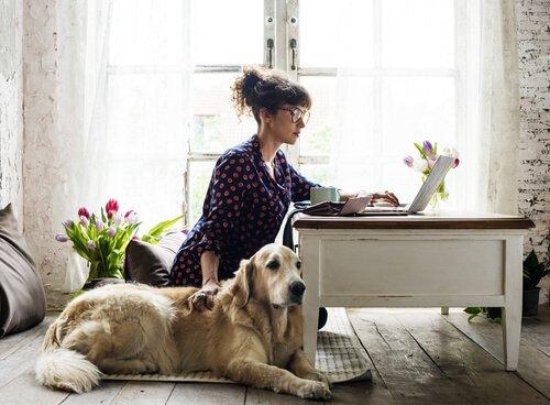Siete pronti per adottare un animale domestico?