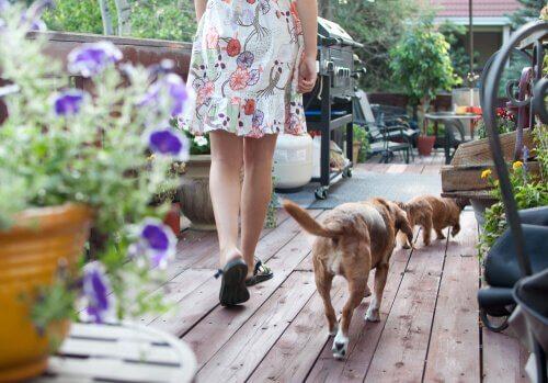 signora cammina in un terrazzo con i cani