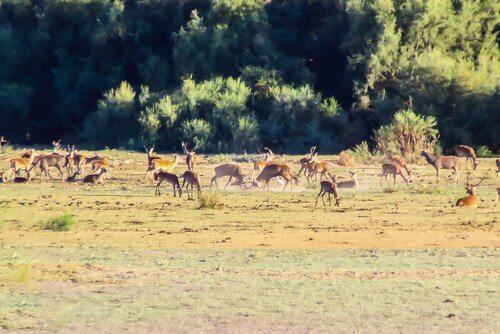 Cervi in un parco naturale