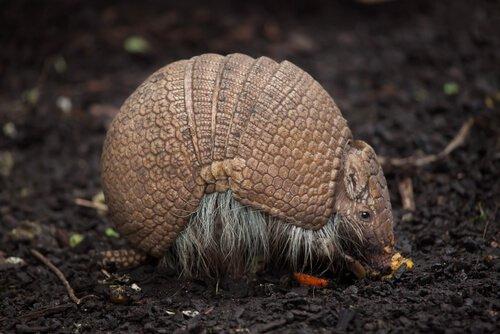 L'incredibile fauna del Brasile