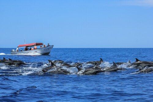 Delfini in libertà nel mare e barca bianca e rossa