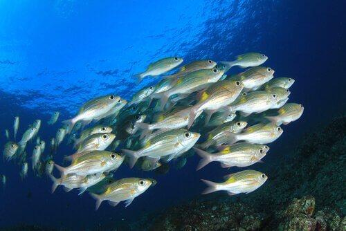 Banco di pesci in mare