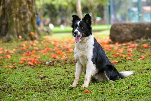 Ajax cane che salva uccelli seduto sul prato