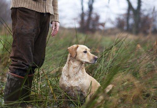 Nomi per cani da caccia