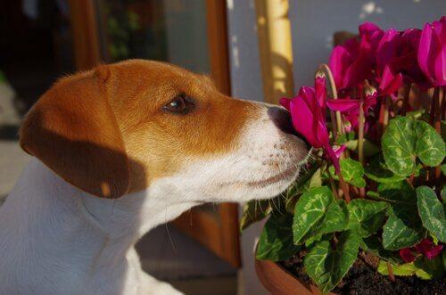 La terapia con i fiori per cani