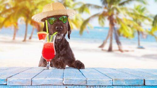 un cagnolino beve un drink sulla spiaggia