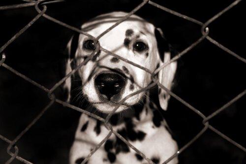 Cosa fare per avere un animale domestico in affidamento?