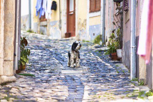 Cagnolino per le strade di Lisbona