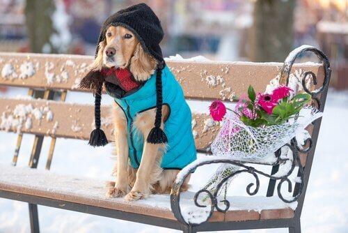 Un cagnolino seduto con cappello sciarpa e giubbotto