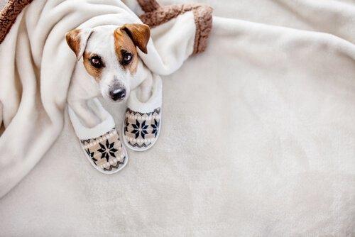 Cagnolino sotto le coperte sul letto