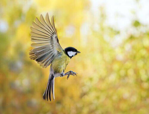Scoprite come attirare gli uccelli in giardino