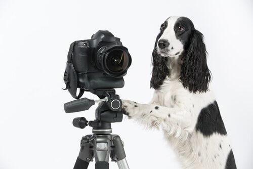 Cane accanto a una macchina fotografica