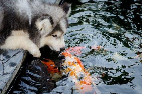Le amicizie tra specie animali diverse più incredibili