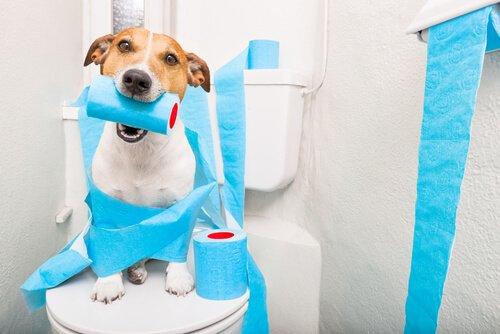 Diarrea nei cani anziani: cosa fare?