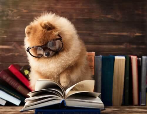 Il test di intelligenza che i cani non superano