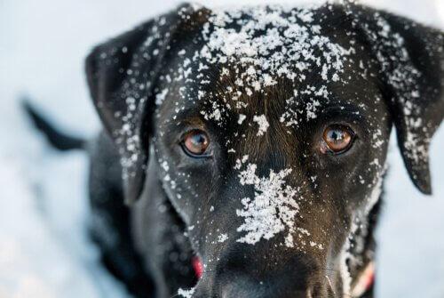 L'ipotermia nei cani