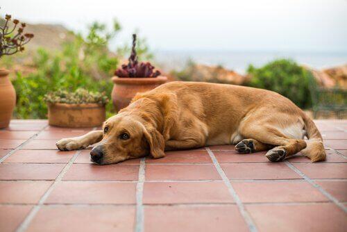 Cane riposa sul suolo di una villa