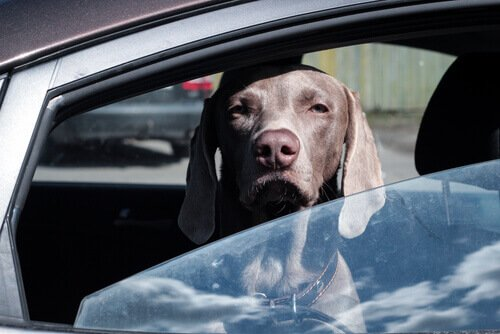 un cane sporge la testa oltre il finestrino della macchina