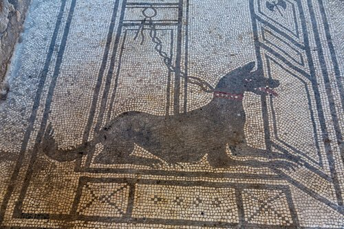 Cane su un mosaico romano