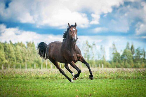 Cavallo corre in un prato verde