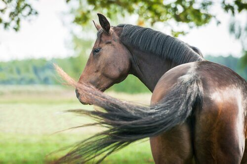 Cavalli mezzosangue: i migliori per l'equitazione