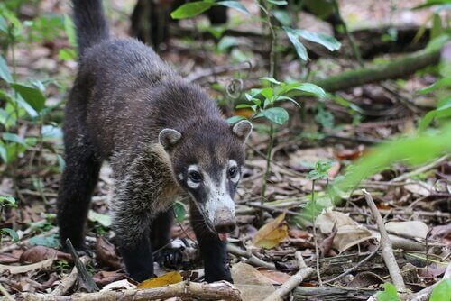 Alla scoperta della fauna dell'America centrale