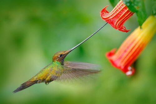 un colibri succhia polline da un fiore