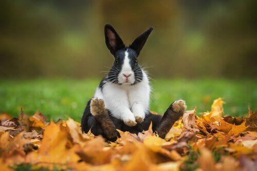 Coniglio bianco e nero seduto sulle foglie
