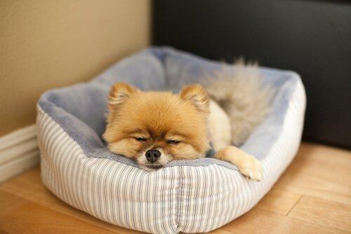 Cane pigro nella sua cuccia
