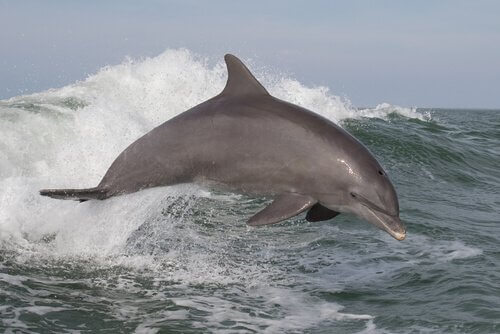 5 delfini oceanici che dovete conoscere