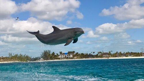 Delfino salta in acqua