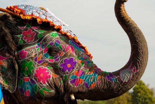 5 animali sacri che dovete conoscere
