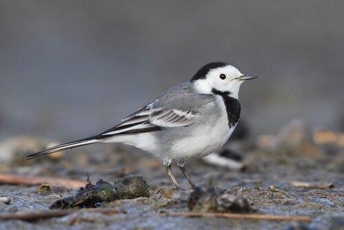 5 bellissimi uccelli urbani da conoscere