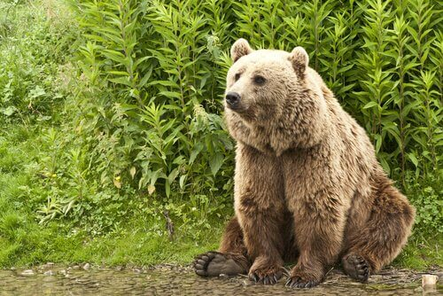 Orso kodiak seduto nella natura