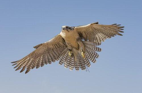 I 5 uccelli che volano più veloci