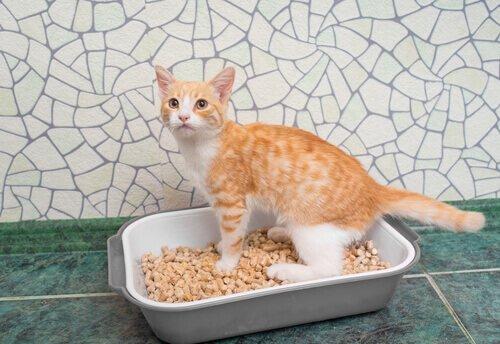 un gattino rosso in piedi su una piccola lettiera